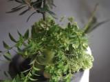 鉢と花束のset